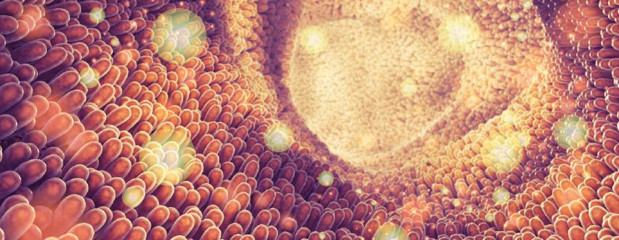 commestibili assorbimento metabolizzato THC fegato