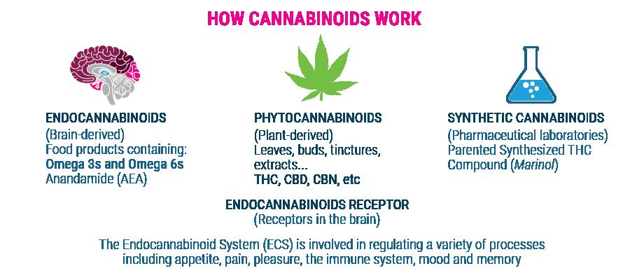 come il lavoro cannabinoidi