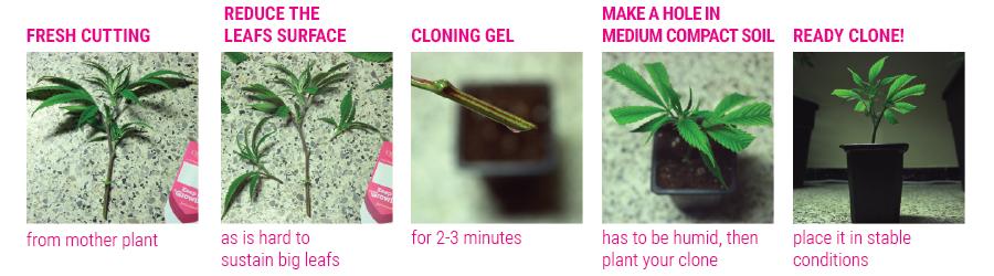 cloni tutorial