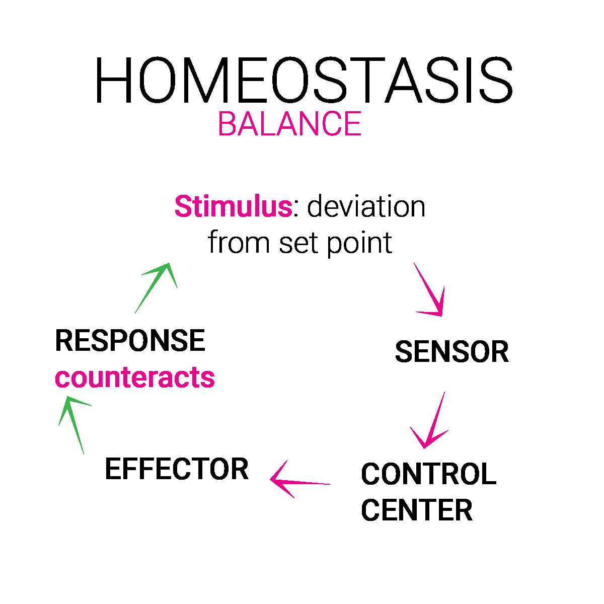 equilibrio omeostasi