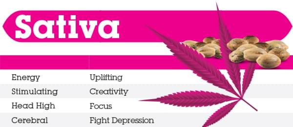 Effects of Sativa Cannabis