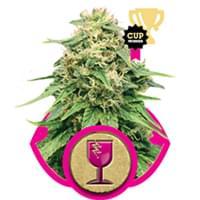 Critical cannabis