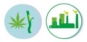 RISORSE RINNOVABILI cannabis