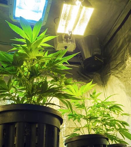 filtri ai carboni e tubi d'aspirazione cannabis