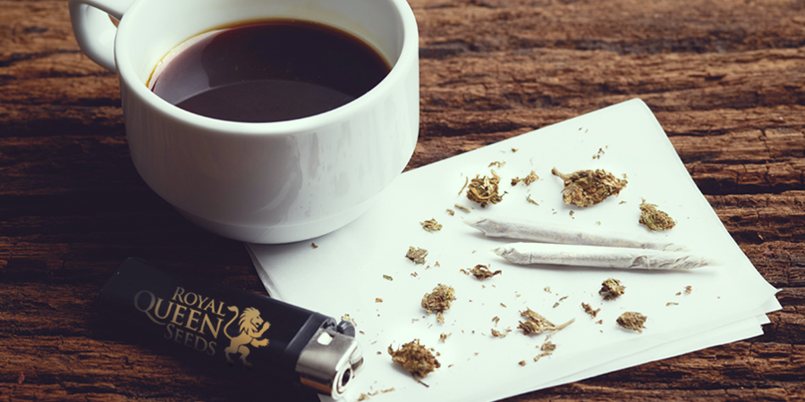 Semi del caffè WEED CANNABIS Royal Queen