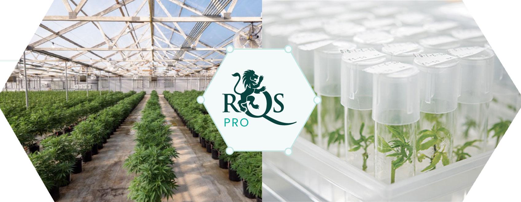 RQS Pro: Per l'innovazione e lo sviluppo del settore cannabico