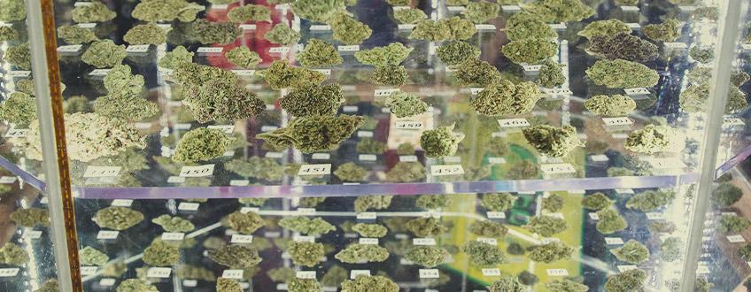 Cannabis Cups - I nostri vincitori