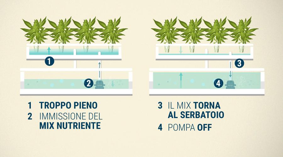 Sistema di coltura idroponica 18 IMPIANTO KIT IMPIANTO Organico grandi risultati in crescita
