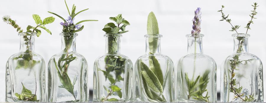 Oli essenziali La cannabis colpisce gli afidi