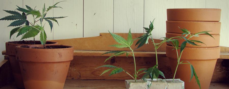 Uruguay parlamentare legalizzazione cannabis