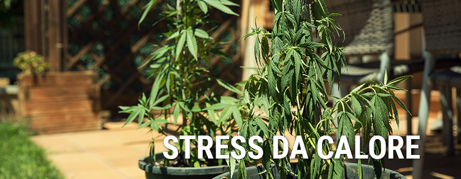 Stress Da Calore Cannabis