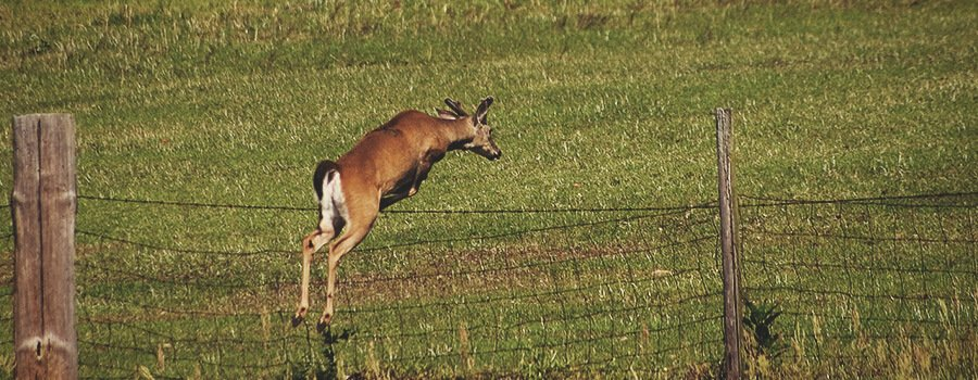 Deer Jumping a Fence
