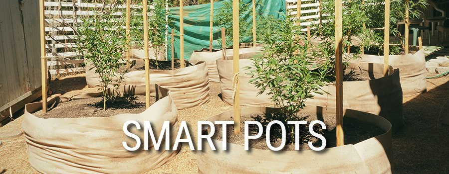 Culture de Cannabis Smart Pots