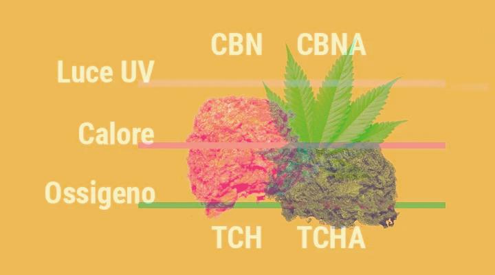Perché la cannabis perde la sua potenza con il passare del tempo?
