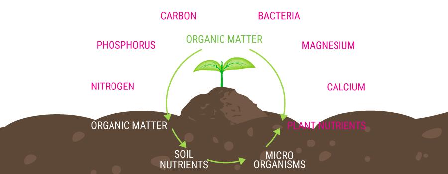 Catena di alimentazione biologica