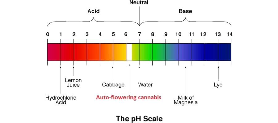 Il valore perfetto di PH per una pianta di cannabis