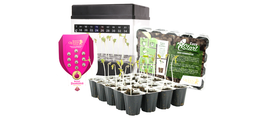 Starters Kit Cannabis Royal Queen Seeds