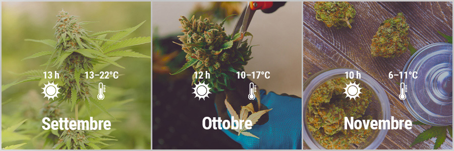 How To Grow Cannabis Outdoors In France