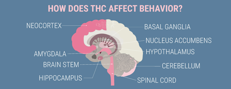 How THC affect behavior
