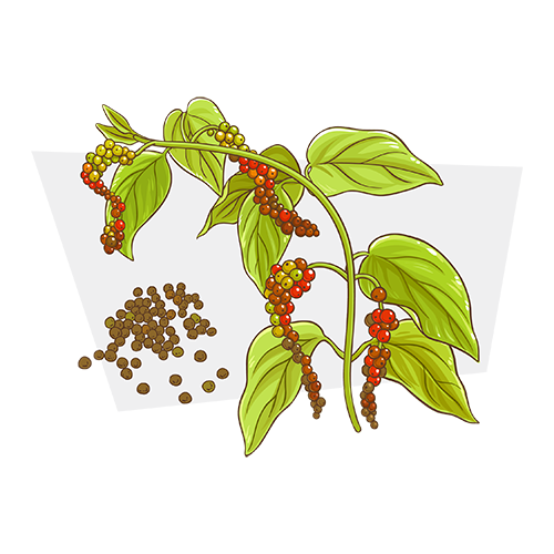 Beta-Caryophyllene