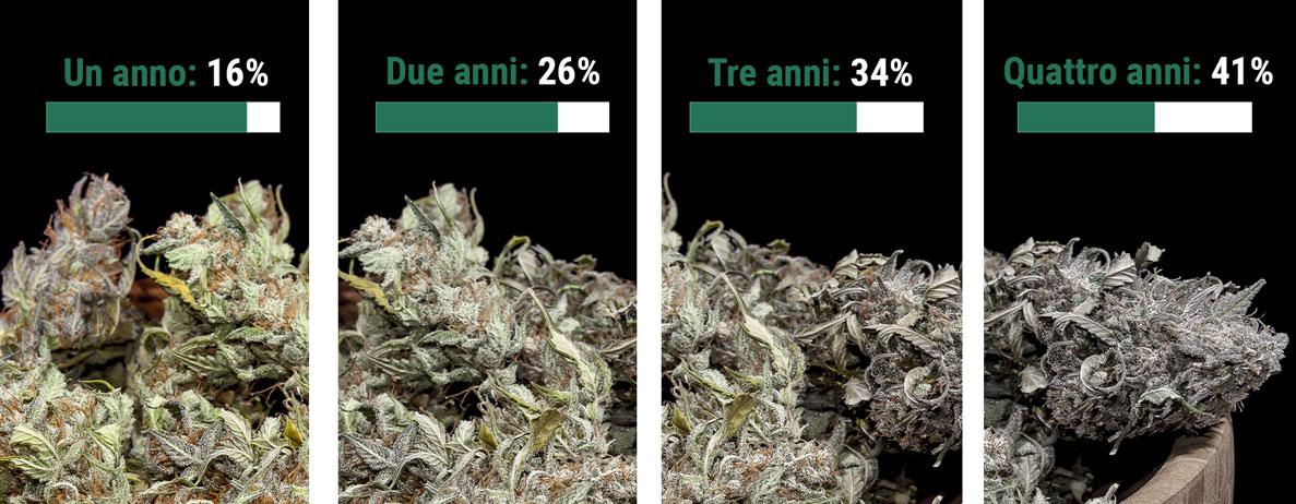 Per quanto tempo si conserva la marijuana?