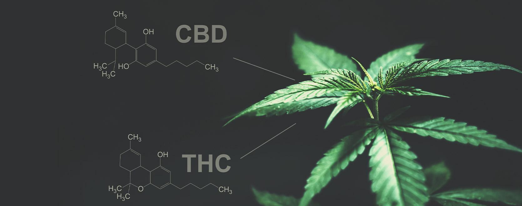 A tal proposito, c'è qualche differenza tra THC e CBD?