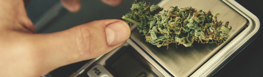 Sfatiamo 10 Miti sulla Marijuana