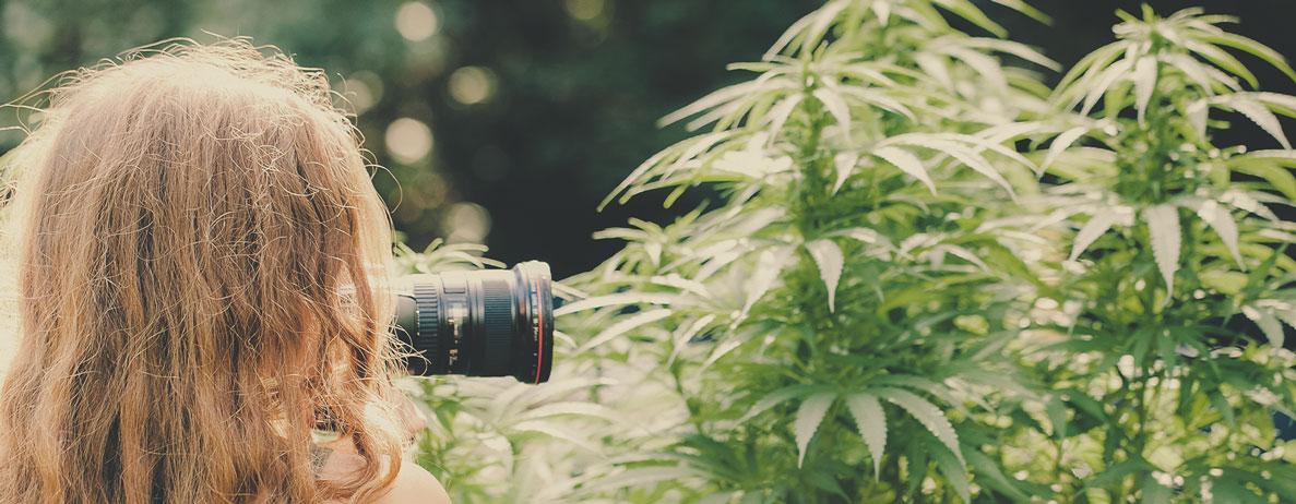 Che tipo di lavoro ci si può aspettare da un fotografo di cannabis (ad esempio nel settore immobiliare, per dispensari, fotoreporter di cannabis…)?