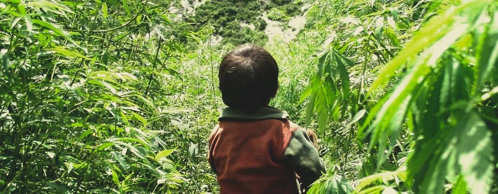 La cannabis può rendere un genitore svogliato e poco energico, interferendo con l'attenzione necessaria per prendersi cura dei figli?