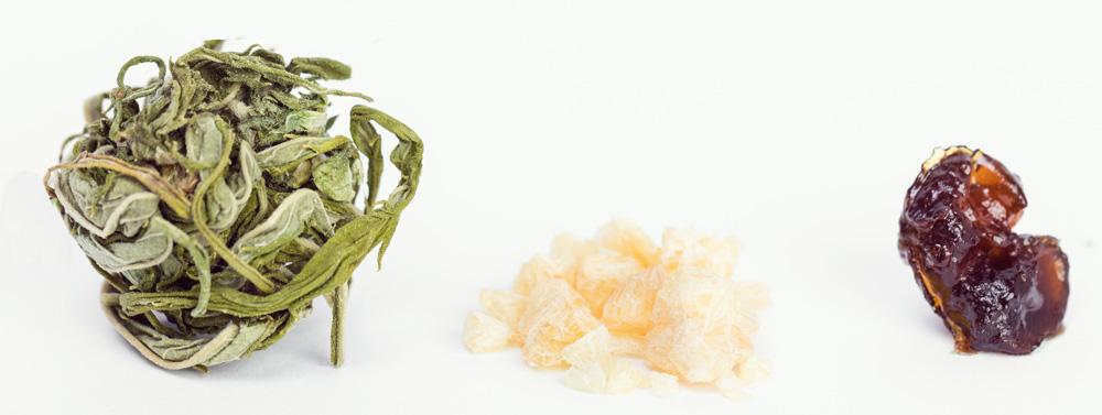 concentra terpeni cannabis olio estrazione cbd marijuana medica