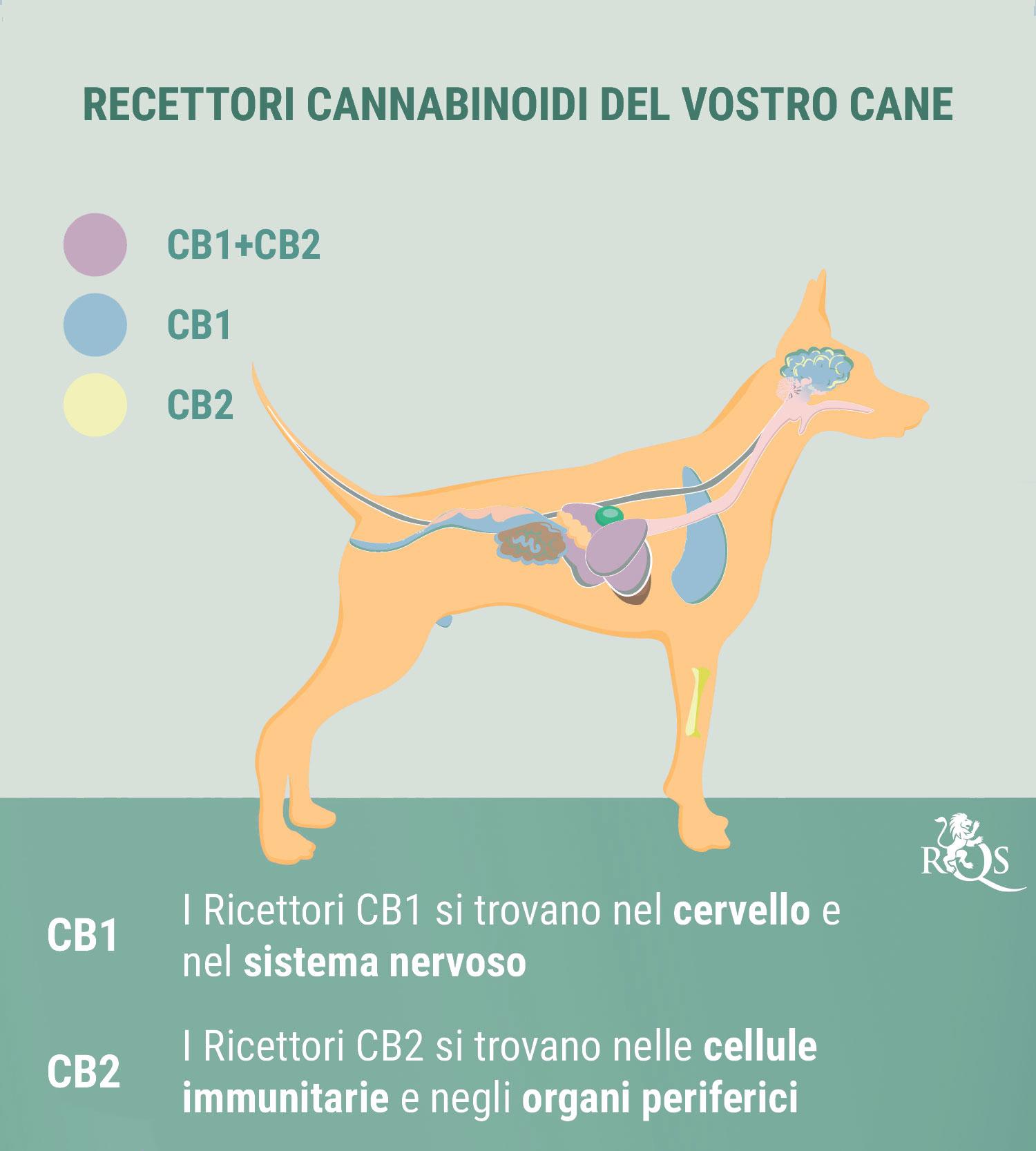 CBD per Cani: Cosa Abbiamo Scoperto Finora