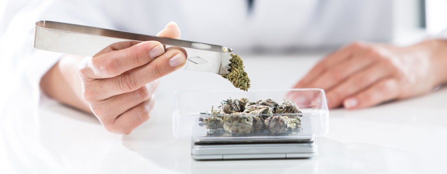 Dosis di cannabis allergica