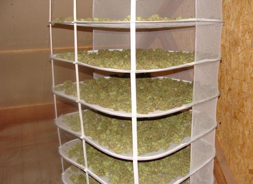 dry room for cannabis