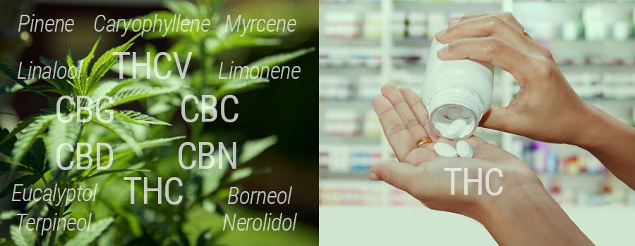 Confronto THC contro THC sintetico