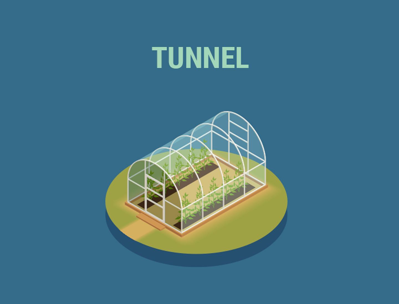 Serre a tunnel