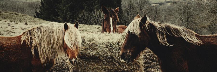 Compost di cavallo organico