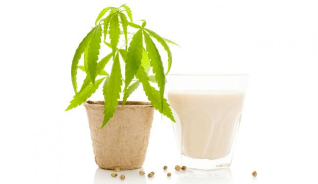 cannabis latte di cocco olio di marijuana gelato alla menta di avocado