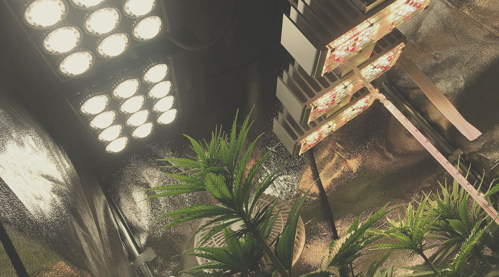 Alza le lampade di coltivazione il più in alto possibile