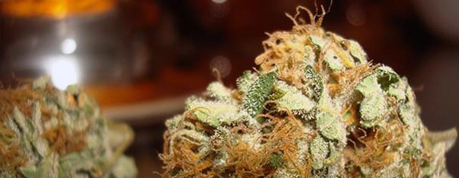 OG kush original gangster ocean grown cannabis