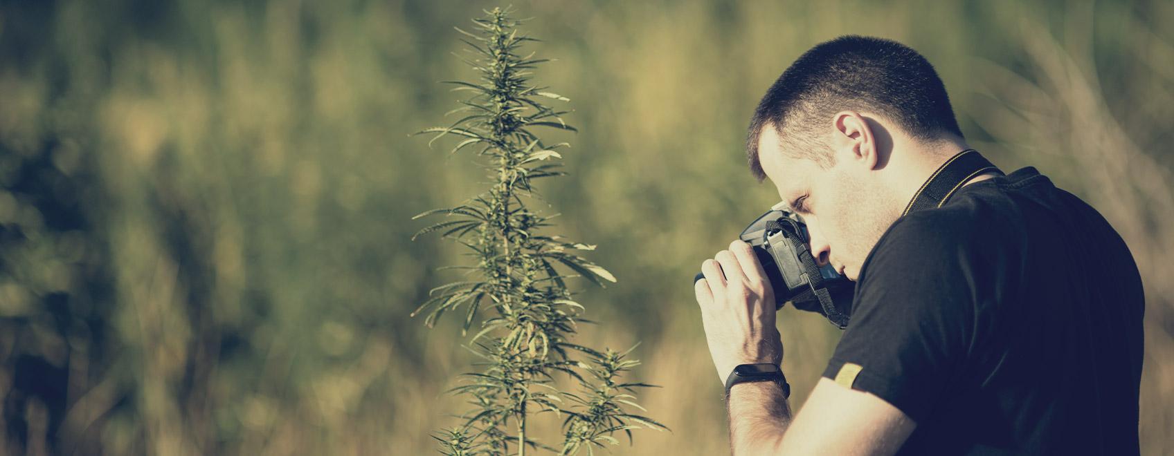Potresti condividere con noi alcuni consigli per scattare foto creative di cannabis?