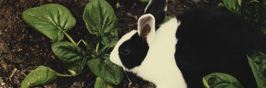 Coniglio organico compost