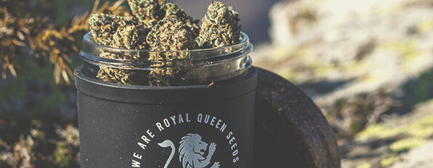 RQS STASH JAR