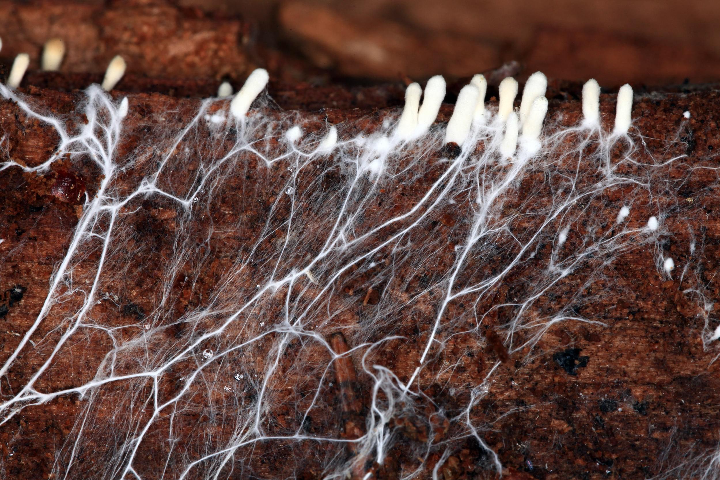 nutrienti radici di canapa alimentare le piante di ossigeno drenaggio