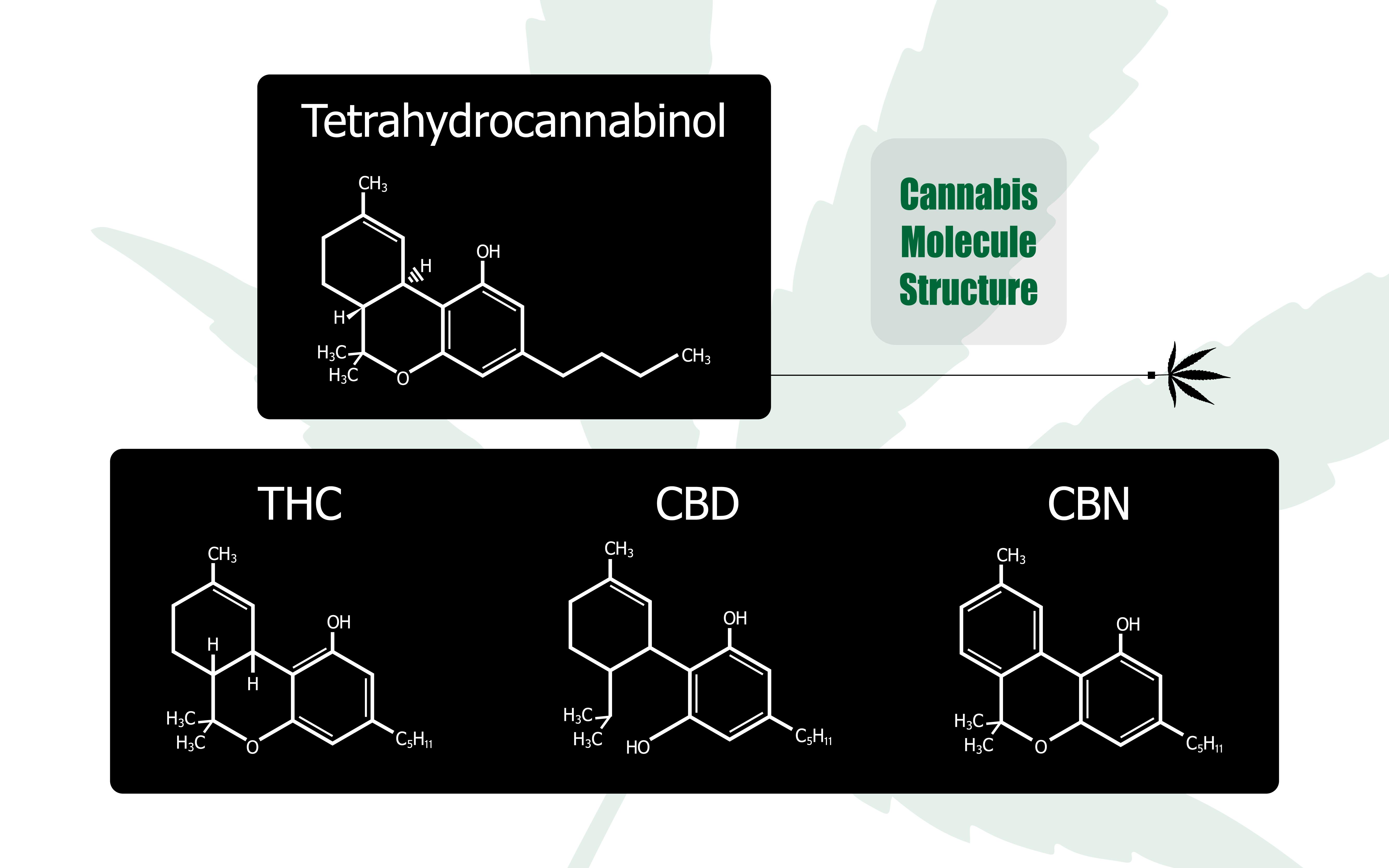 CBD THC effetto entourage contrasta simbiosi sistema immunitario psiche cannabis marijuana medica cannabinoide modulare degli endocannabinoidi