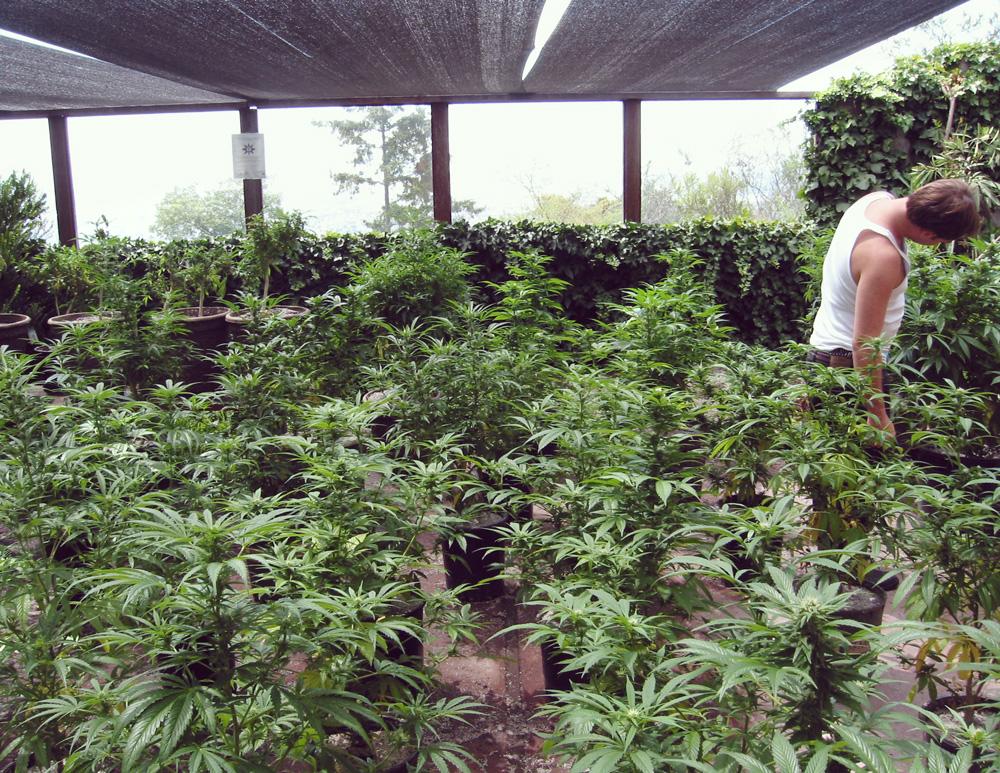 spagna legge legalizzazione catalogna ricreativo della marijuana terapeutica medica