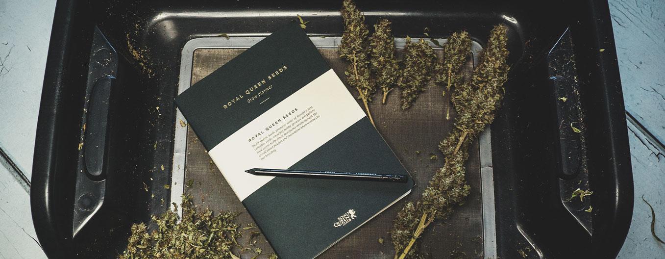 Diario del consumo di cannabis