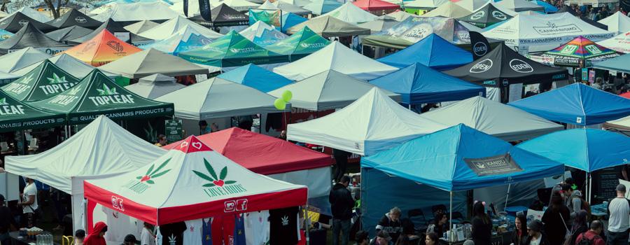 Norml legalizzazione cannabis