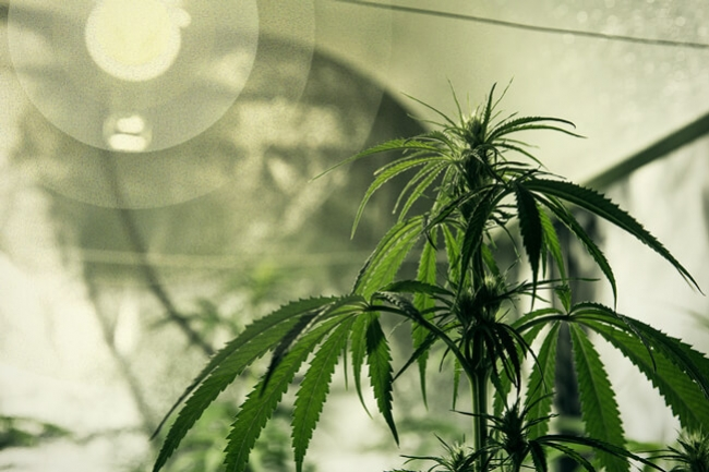 Il migliore sistema d illuminazione per la coltivazione di