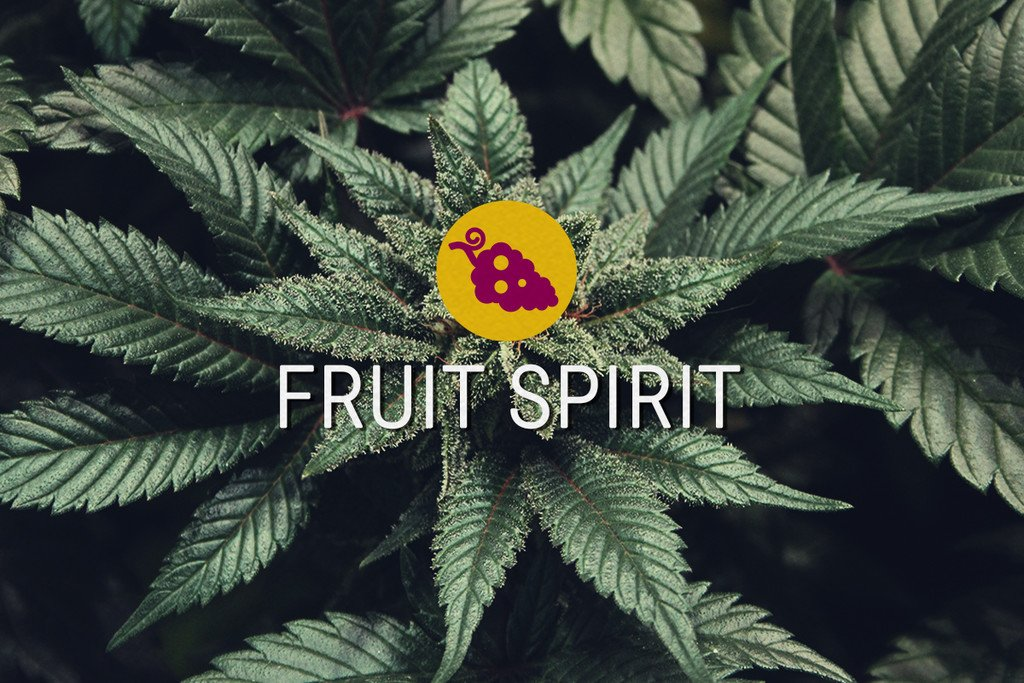 Fruit Spirit semi di cannabis Femminizzati