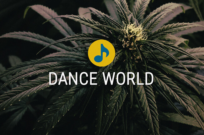 Semi di cannabis terapeutica Dance World